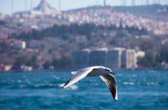 Istanbul_meysam etemad tF6doVfmhTo unsplash
