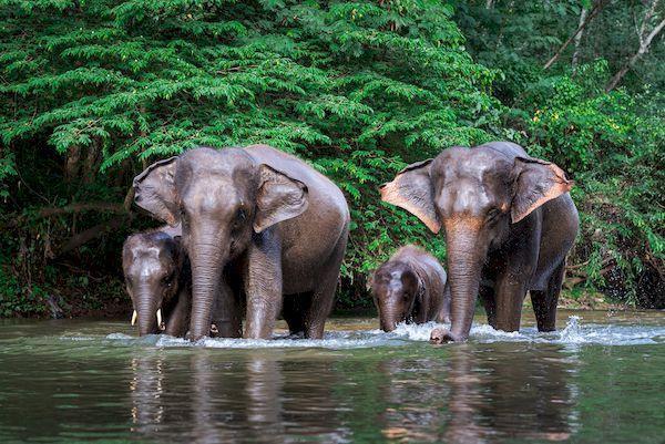 Открытие Таиланда 2021_thailand elephant family water
