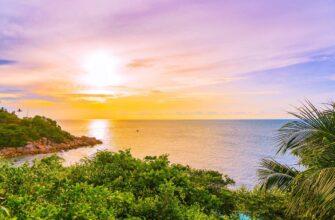 Samui plyus programma samui island with coconut palm tree other sunset time