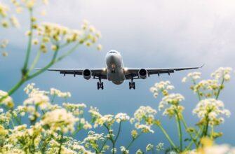 dengi za bilety na otmenennye reysy landing airport view with flowers